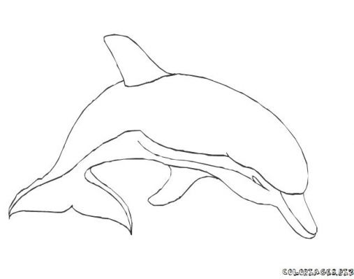coloriage 12 dessin Dauphins