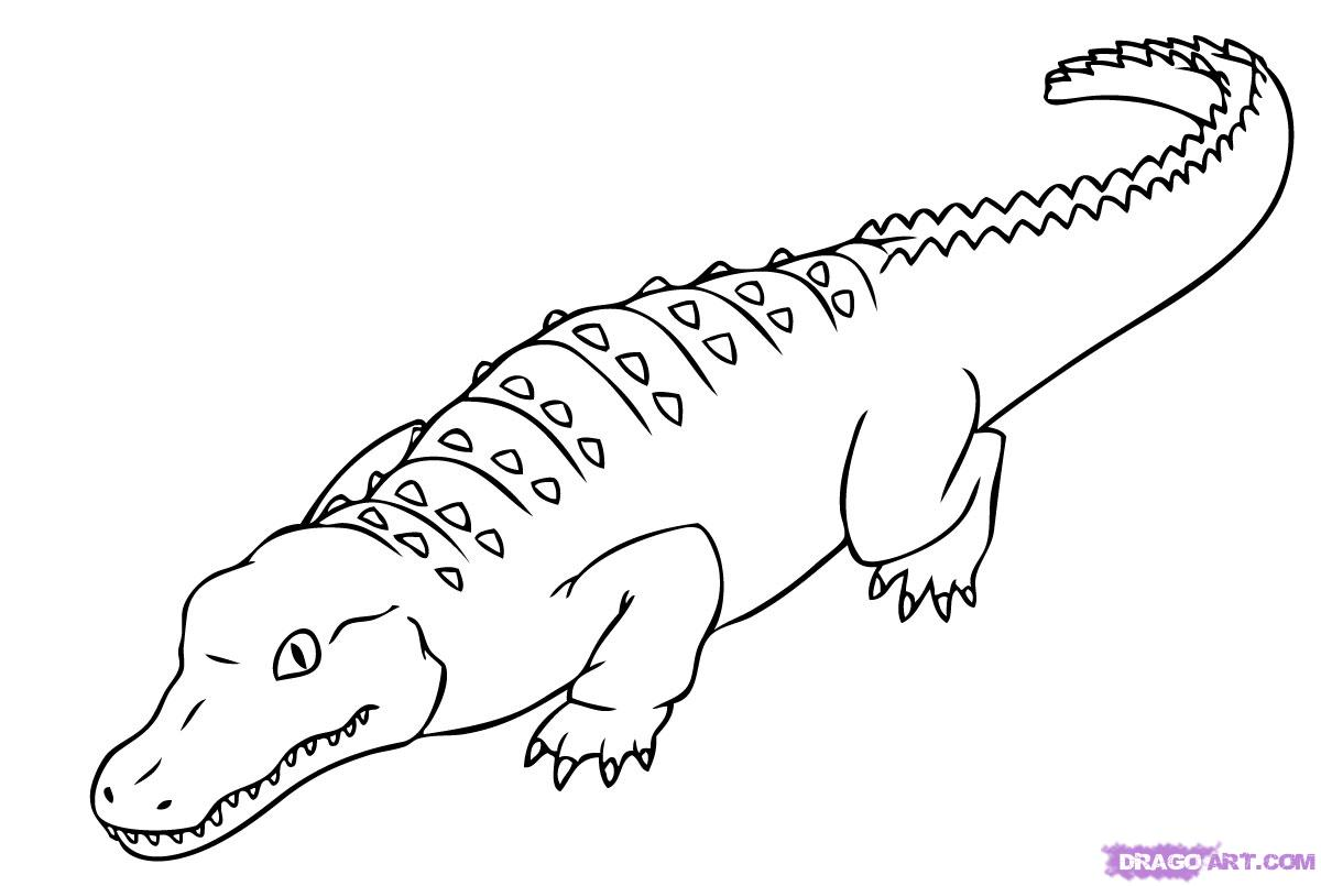 coloriage de alligator