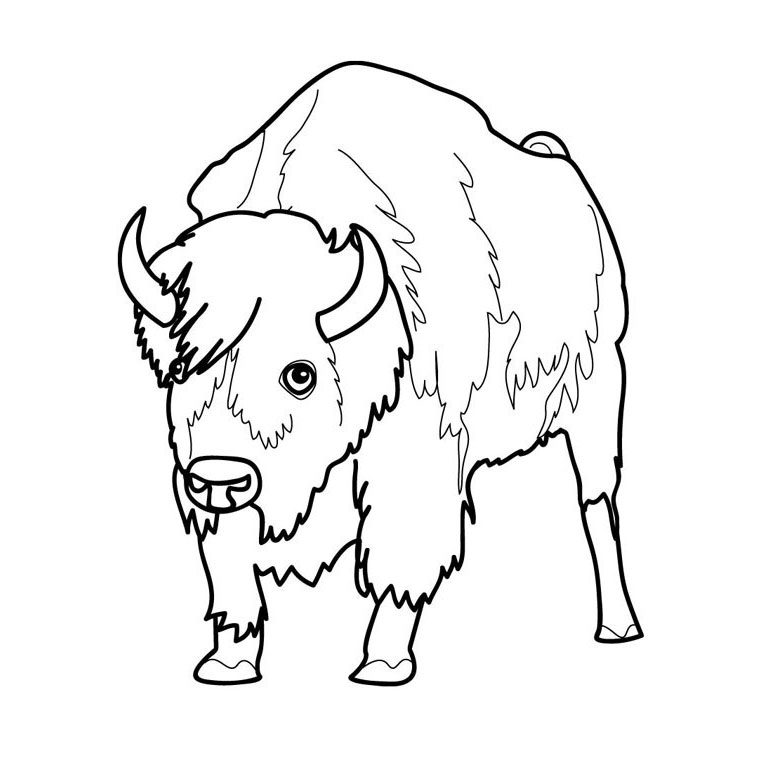 coloriage de bison