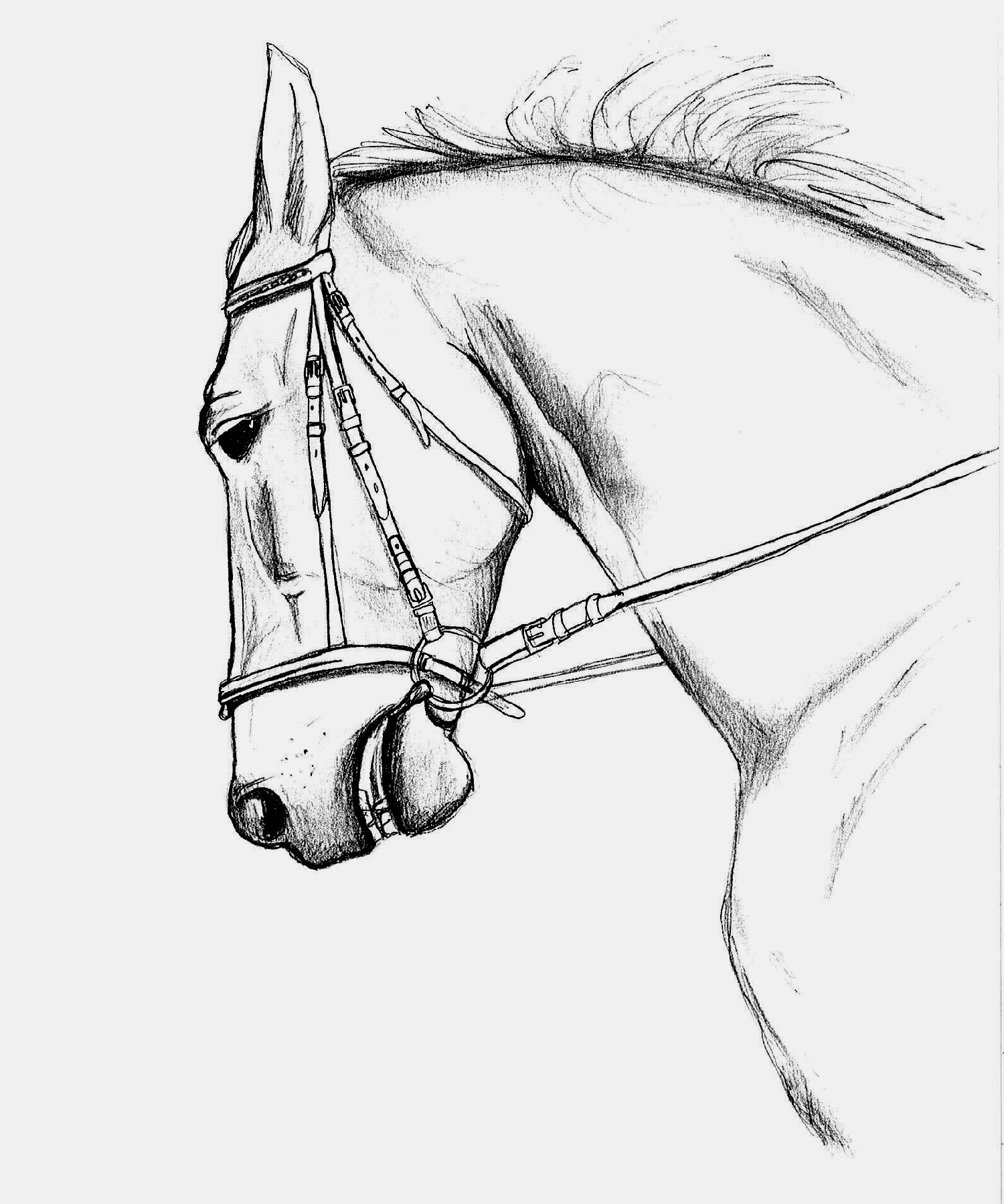 Impressionnant Coloriage A Imprimer Animaux Cheval