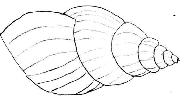 Coloriage escargot les beaux dessins de nature - Coloriage de coquillage ...