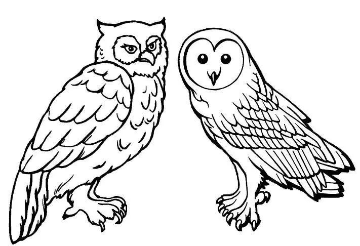 coloriage hibou les beaux dessins de animaux imprimer et colorier. Black Bedroom Furniture Sets. Home Design Ideas