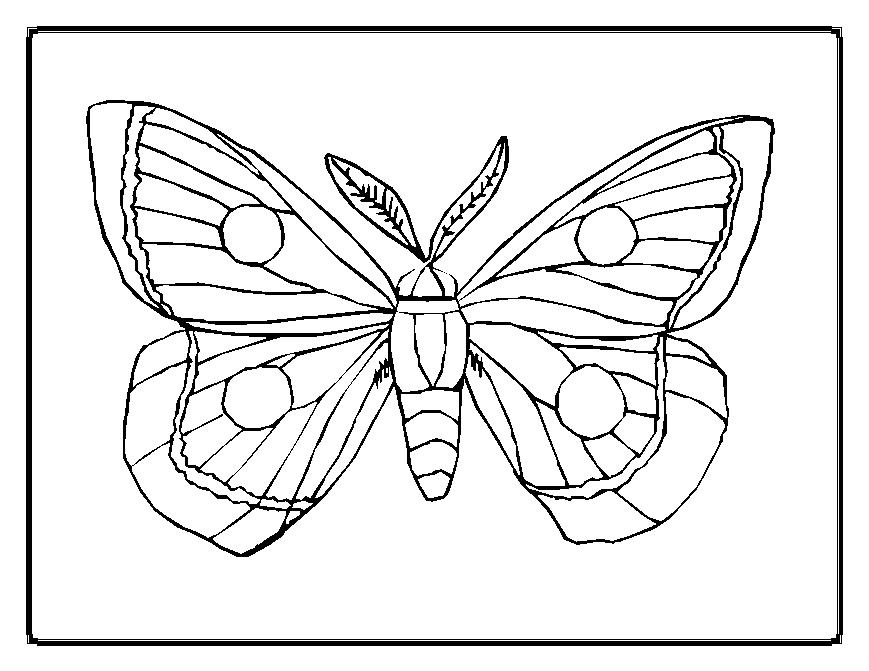 coloriage de papillon