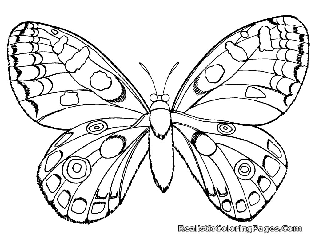 Coloriage Papillon Difficile Les Beaux Dessins De