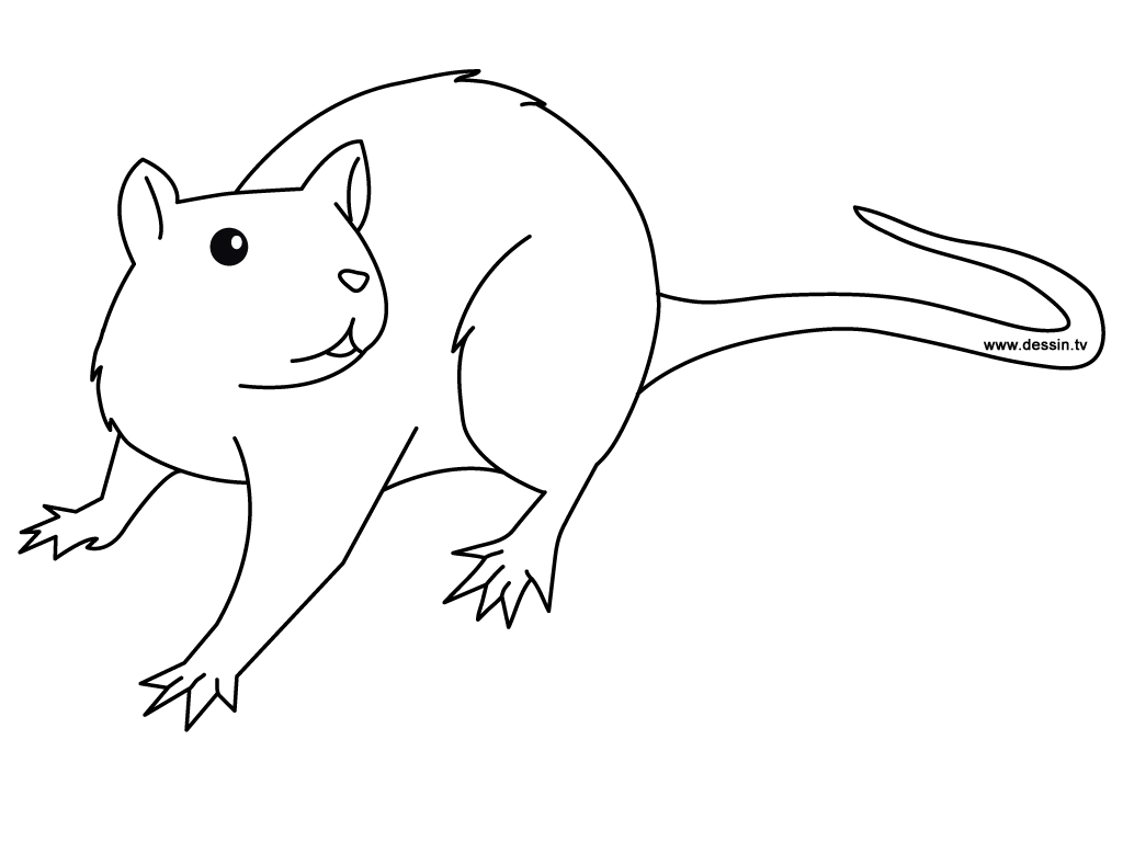 coloriage de rat