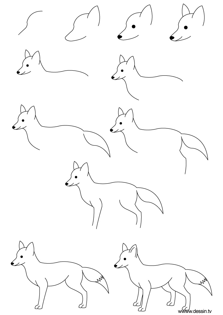 How To Draw A White Wolf Step By Step Anime Animals: Les Beaux Dessins De Animaux à Imprimer