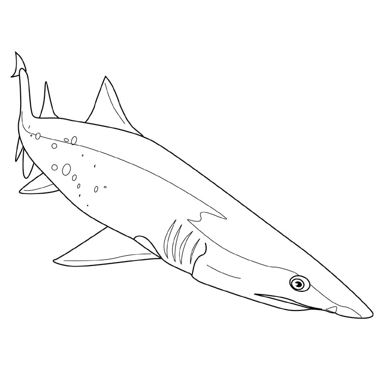 coloriage de requin