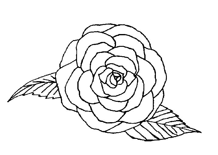 coloriage roses les beaux dessins de nature imprimer et colorier. Black Bedroom Furniture Sets. Home Design Ideas
