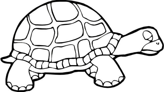 Ninja turtles printable coloring pages for teenagers s - Tortue dessin ...